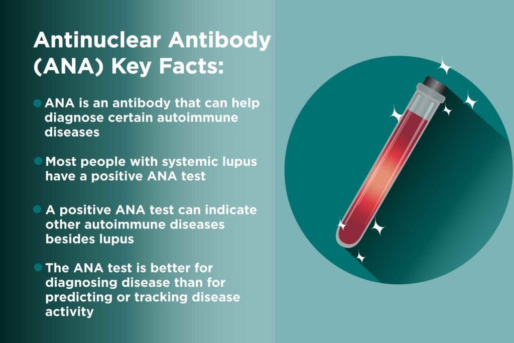 Antinuclear Antibody Test Facts