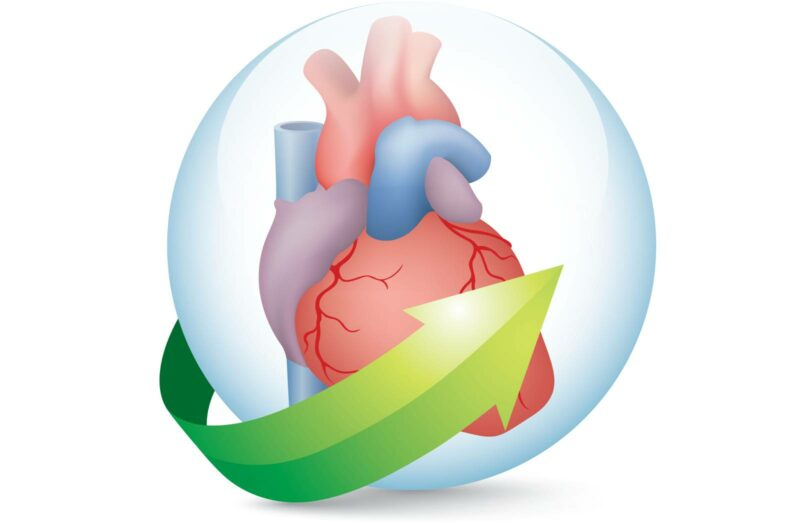 An illustration of a heart placed in a clear globe.